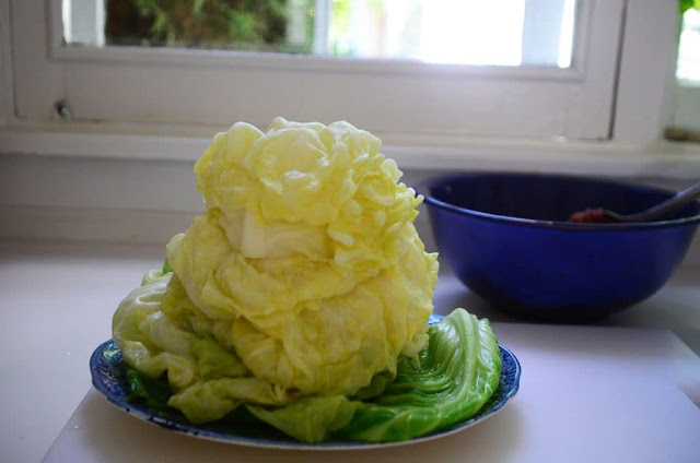 Stack of cabbage leaves