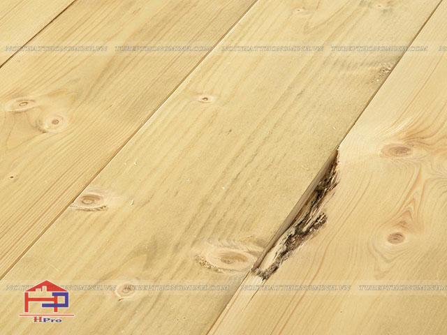 Nguyên nhân gỗ tự nhiên bị mối mọt tấn công