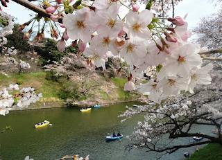 5 Hal yang Perlu Kamu Tahu Tentang Musim Semi di Tokyo Jepang