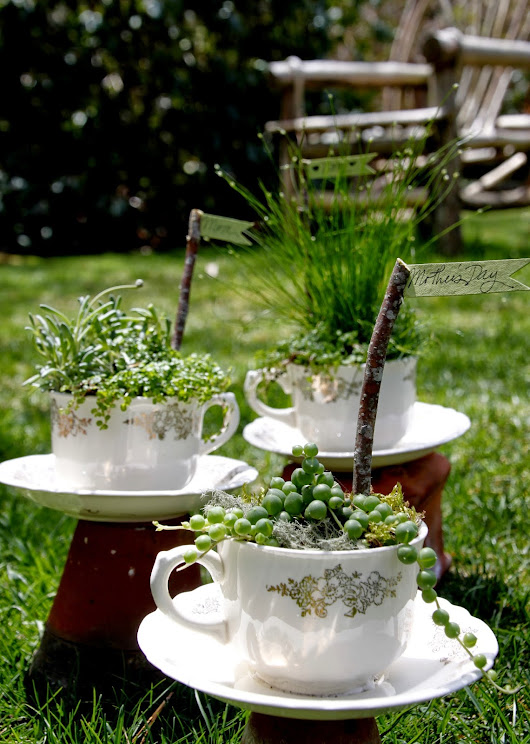 Tilly's Nest: Teacup Gardens for Mother's Day