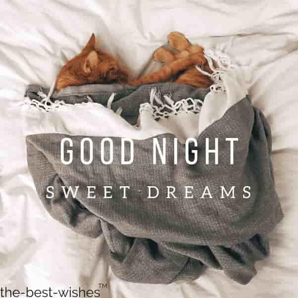 funny cats good night sleeping image