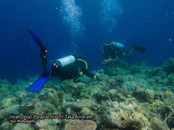 Jinato Wall Paradise Spot Menyelam yang Cocok Untuk Pemula