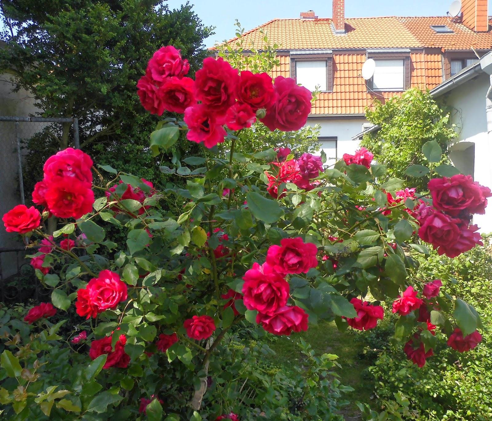 Blumen Im Juni strickliesl blumen und bienen im juni juli