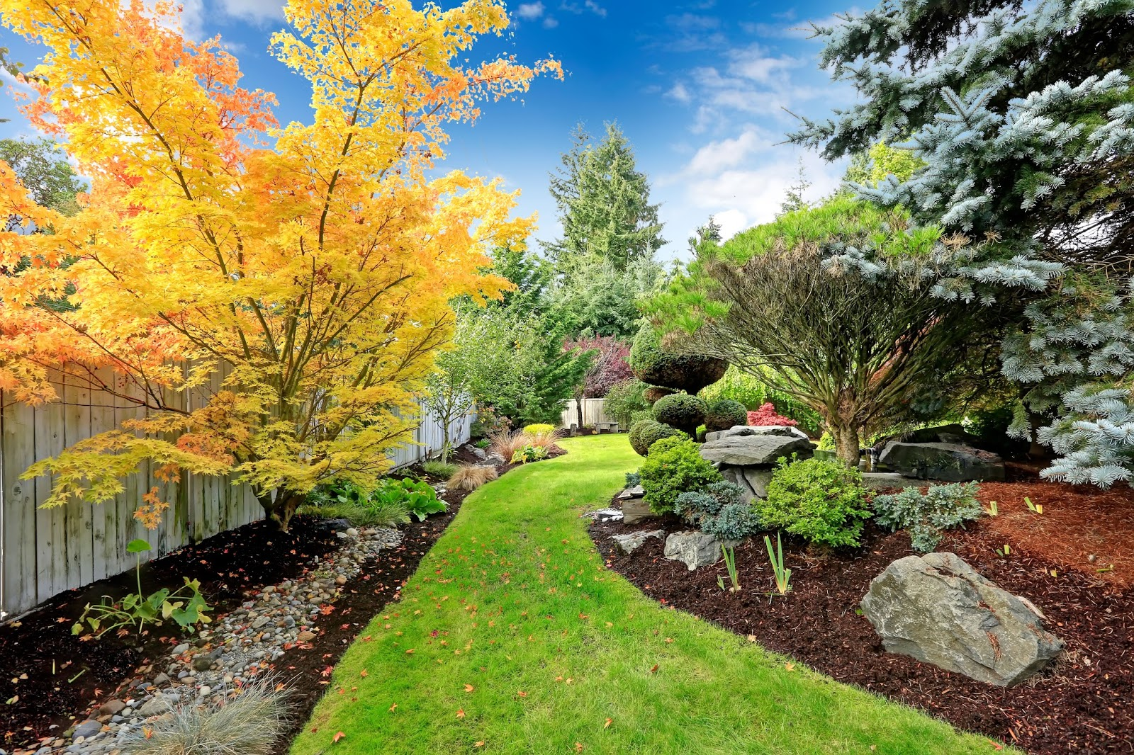 plants shrubs and trees installation lawn and landscaping in dc