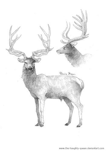 ciervos extintos de europa Megaceroides