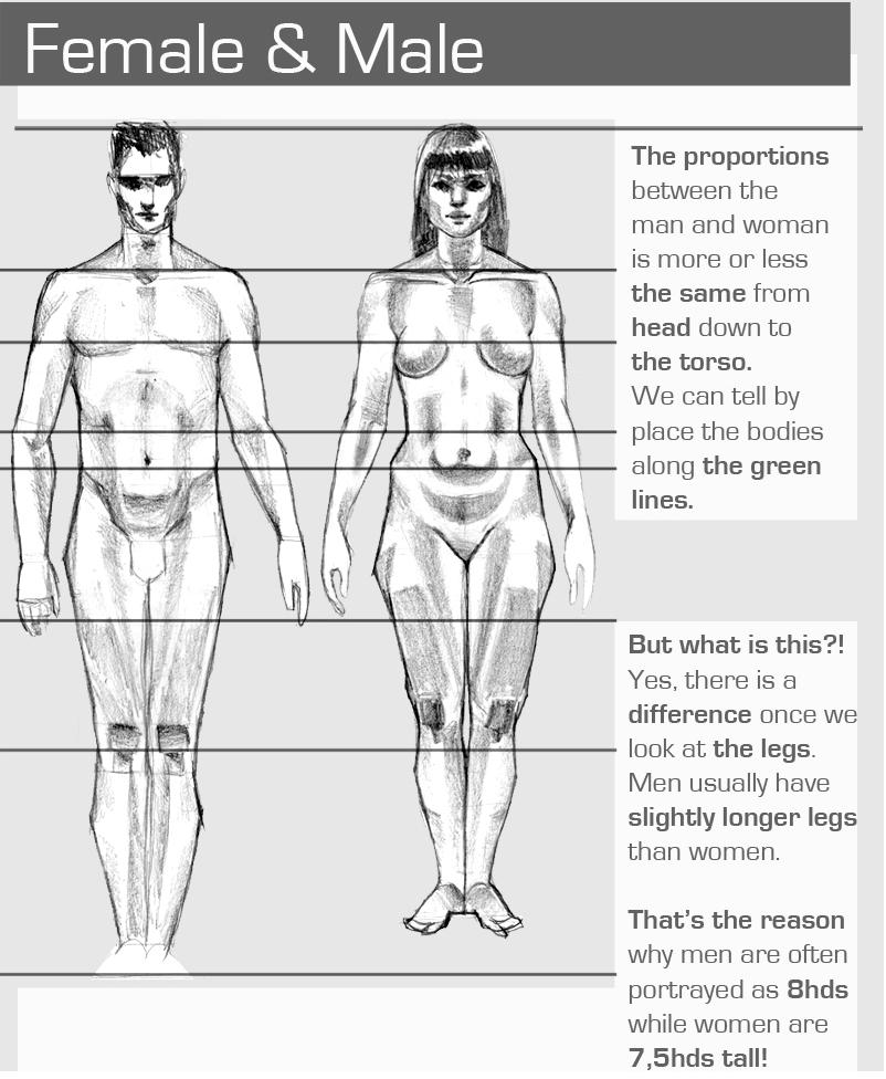 Human Anatomy Ergonomics