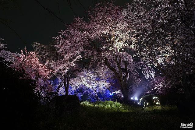 福岡城さくらまつり、福岡