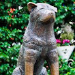 Hachiko-The Faithful Dog