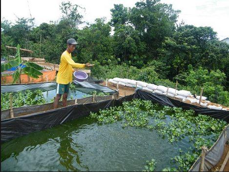 Pakan Ikan Lele yang Mudah diTemui di Sekitar Kita