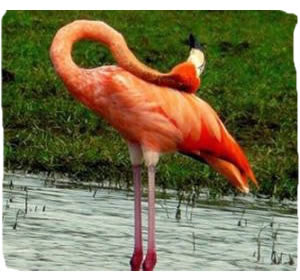 Beautifull Flamingo disappears