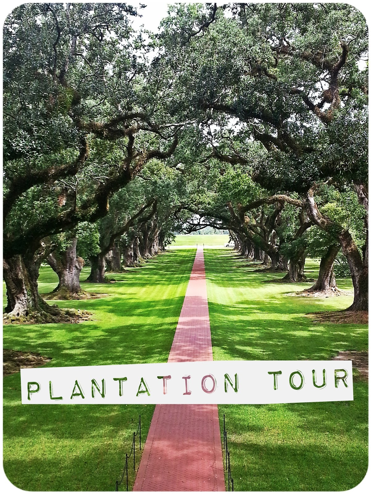 Johanna: Oak Alley Plantation