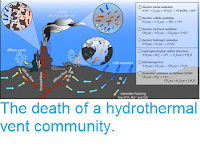 http://sciencythoughts.blogspot.co.uk/2012/03/death-of-hydrothermal-vent-community.html