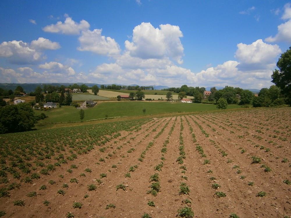 Culture de pommes de terre au gaec de puy basset juin - Semer des pommes de terre ...