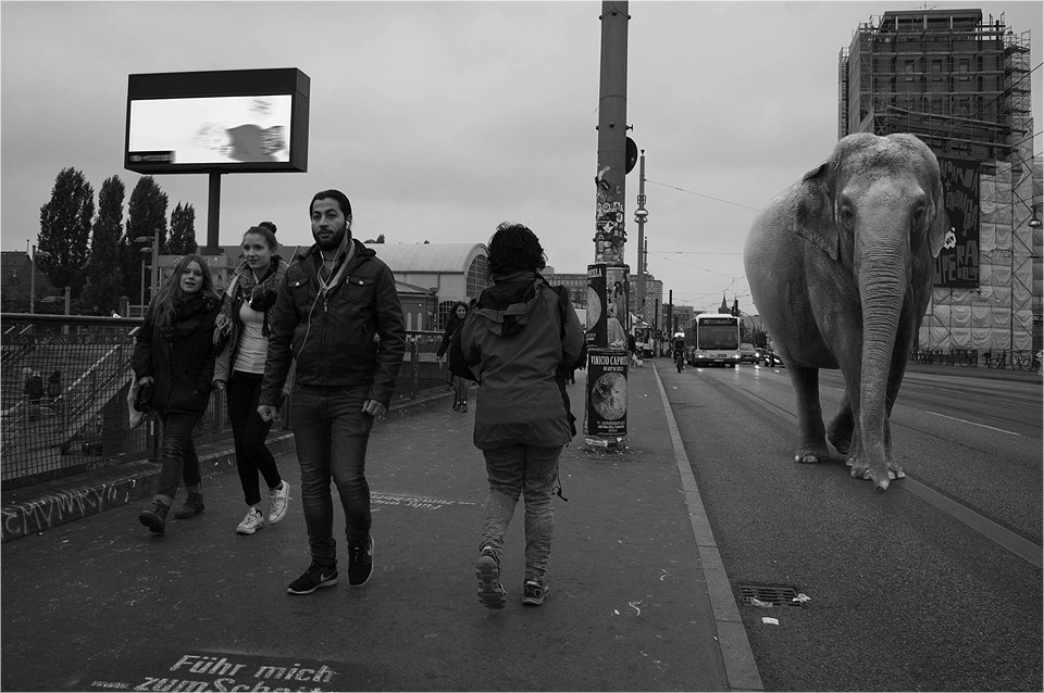 01-Elephant-Ceslovas-Cesnakevicius-The-Zoo-on-our-Streets-Black-and-White-Photography-www-designstack-co