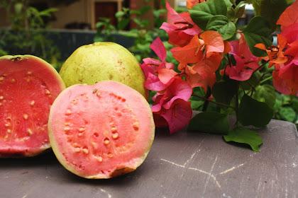 'History Of Psidium Guava'