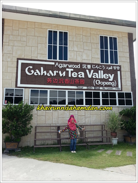 Tempat menarik di Perak| Gaharu Tea Valley | Teh Gaharu (Gopeng)