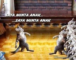 Kumpulan Gambar Kucing Numpang Lewat Lucu Untuk Komentar