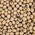 Análise de Mercado – Taxação argentina ou mercado europeu: quem mais impacta no mercado da soja brasileira