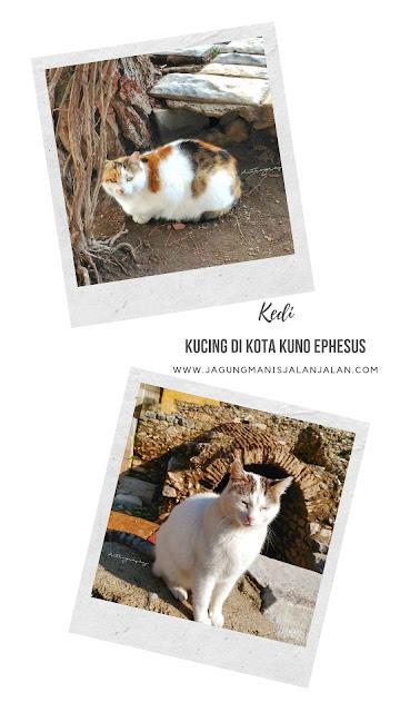 Turki dan Kucing Jalanan