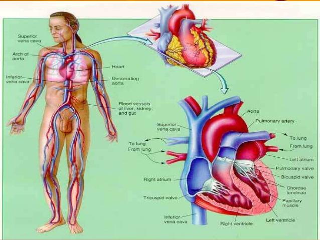 Cara Meningkatkan Metabolisme Dalam Tubuh