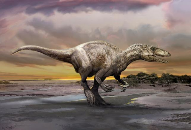 New dinosaur species may give clues to evolutionary origin of megaraptorid clade