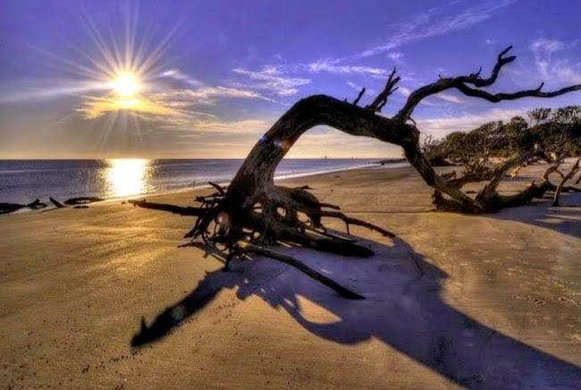 4.) Driftwood Beach - Jekyll Island, Georgia - These 14 Beaches Are Uniquely Awesome. I Want To Go To There!
