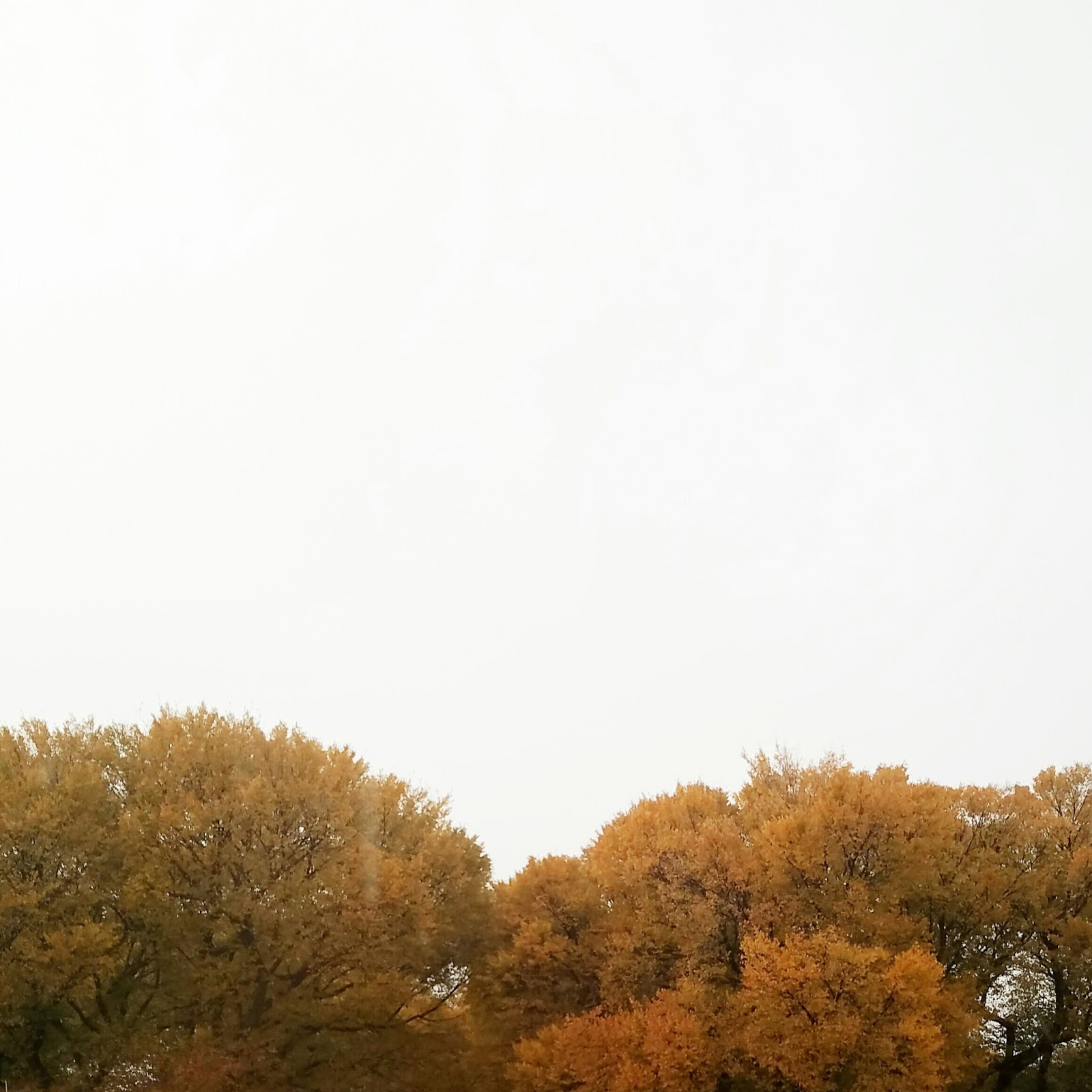 beautiful chicago fall trees