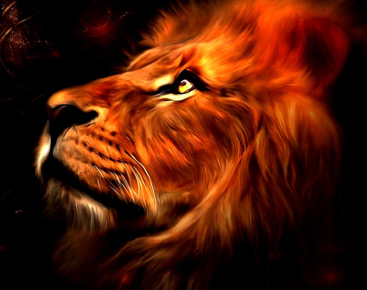 3d Lion Hd Wallpaper Smart Wallpapers