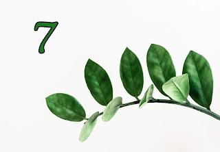 dzień urodzenia 7, znaczenie, numerologia, horoskop, 7
