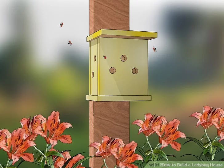 The most effective method to Build a Ladybug House - How to Build a Ladybug House?