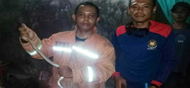 Petugas Damkar Prembun Kebumen mengevakuasi ular kobra dari kamar warga, Kamis (19/12/2019