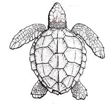 complex turtle color in sheet
