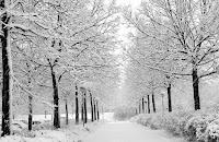 İki tarafında ağaçlar olan bir yola yağmış kar ile oluşmuş kış manzarası