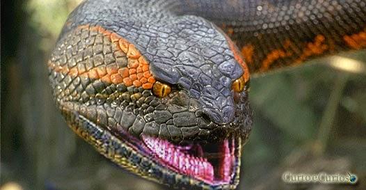 5 animais mais gulosos do mundo