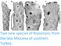 http://sciencythoughts.blogspot.co.uk/2013/11/two-new-species-of-bryozoans-from-late.html