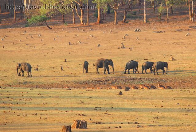Elephant Corridor of Kabini