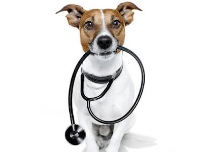 Potrebne su odredjene pripreme i lekovi za anesteziju - Panvet Subotica