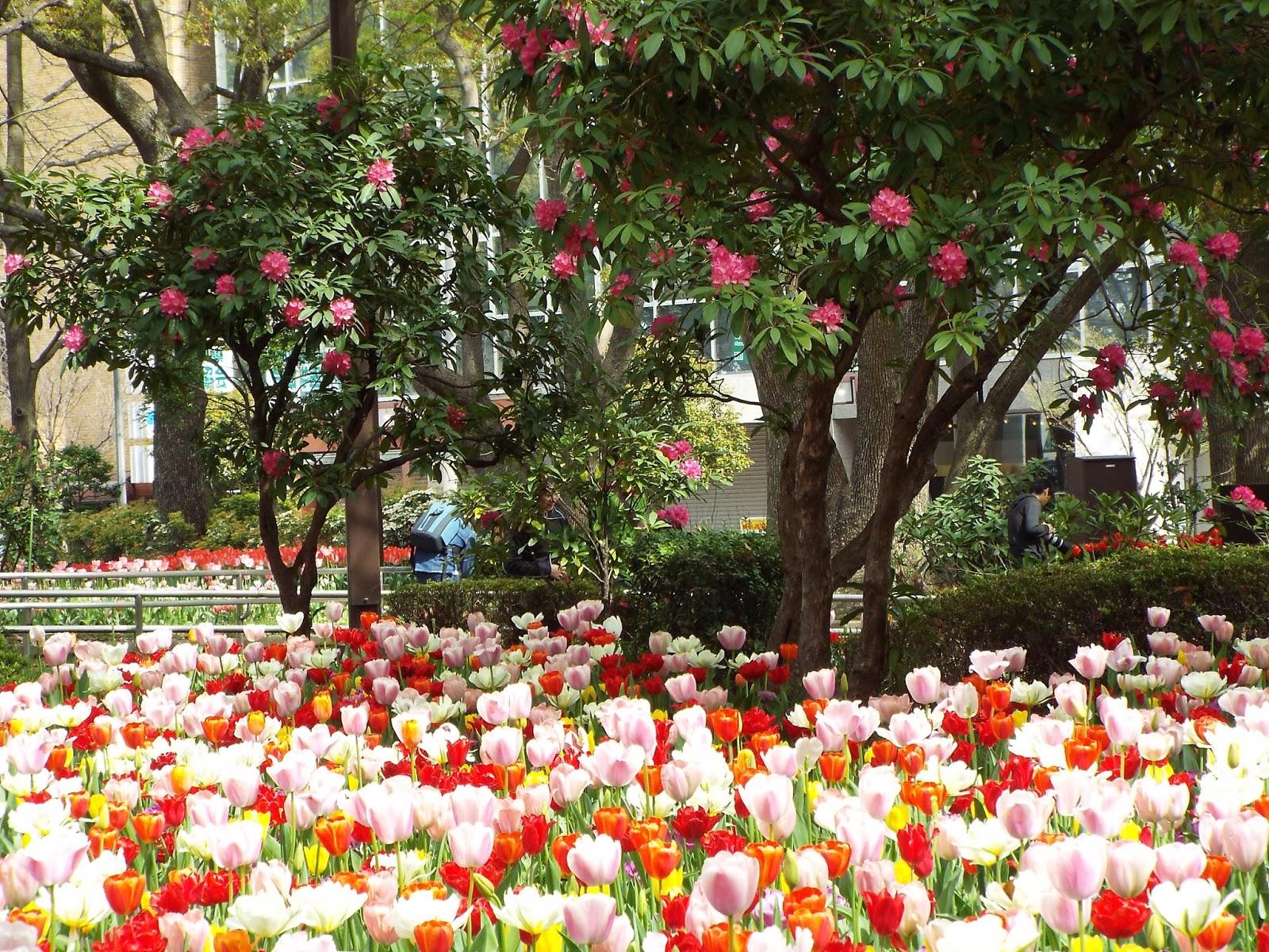 Yokohama Tulip Festival And Spring Flowers Japan An Expat In