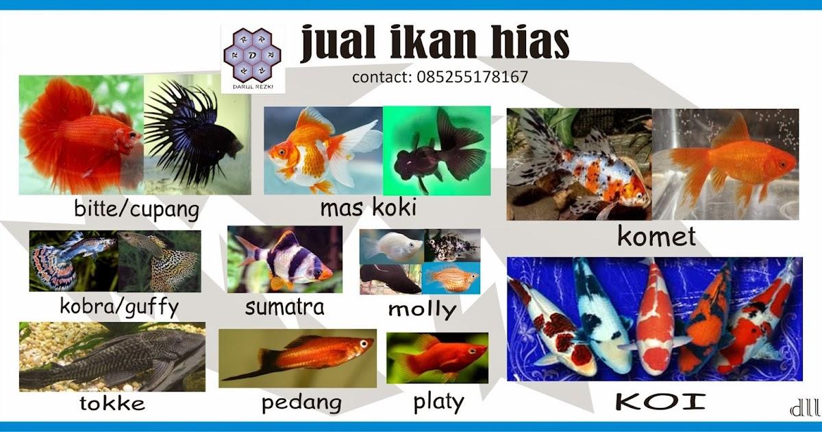 Contoh Spanduk Jual Ikan Cupang - gambar spanduk
