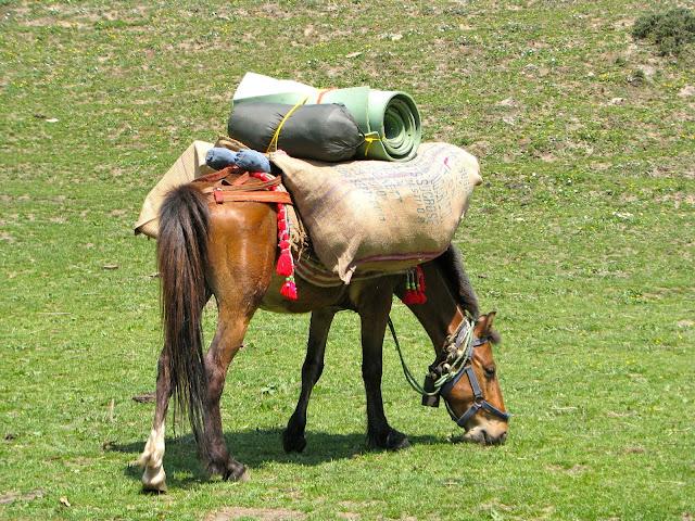 Chetak grazing away loaded