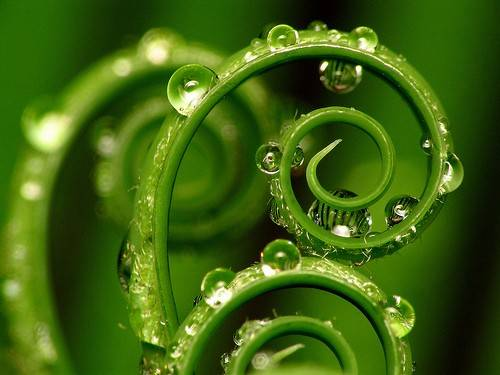 Mandala Madness Natural Spirals