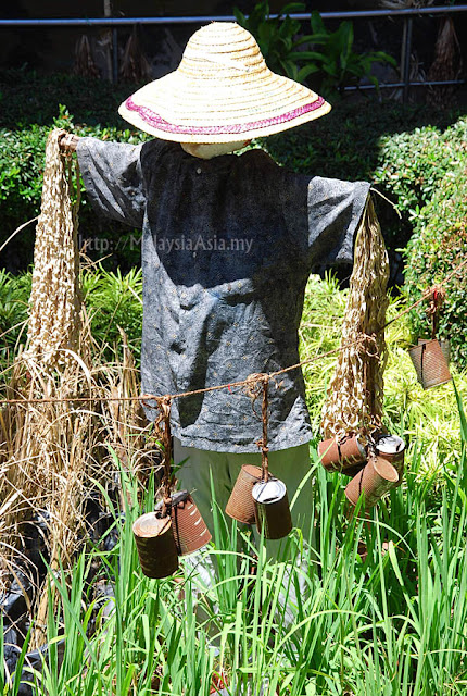 Scarecrow in Sabah