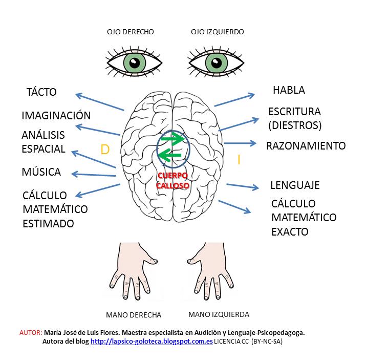 La psico-goloteca: INFLUENCIA DE LA LATERALIDAD EN EL APRENDIZAJE