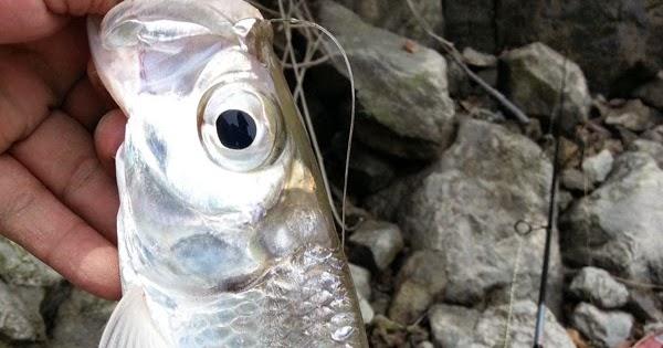 Pflueger Fishing Reel Supreme