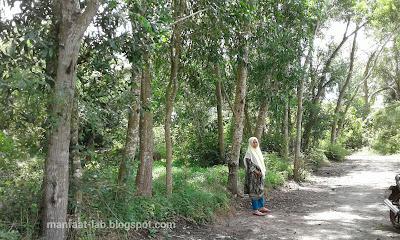 Kelebihan Pohon akasia liar