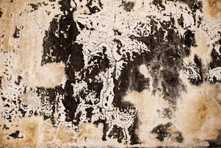 black mold growing on drywall