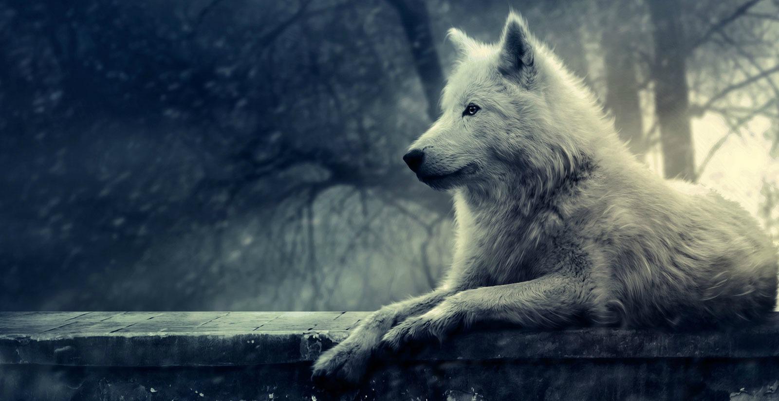 Ombre angeliche recensione quot julie dei lupi