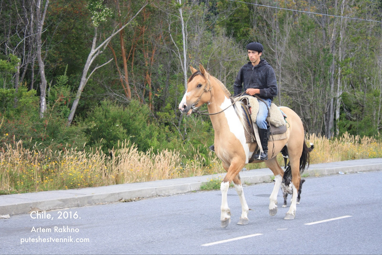 Чилиец на лошади