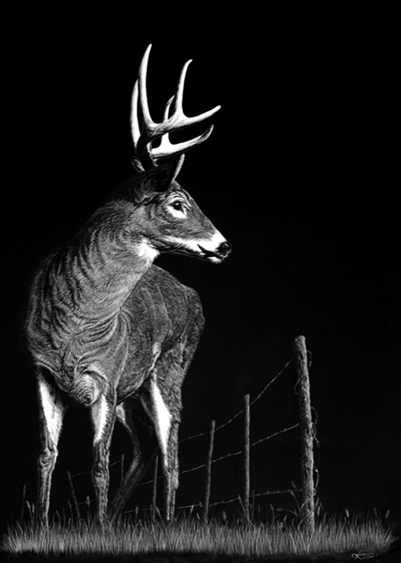 09-Stag-Allan-Ace-Adams-Scratchboard-Drawings-of-Wild-Animals-www-designstack-co