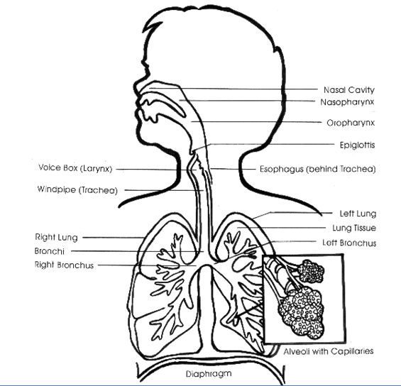 Acute Care: Nursing Care For Acute Respiratory Failure